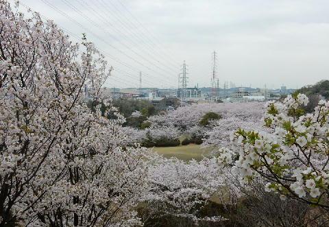 桜の園 2
