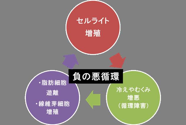 セルライト増殖の負の悪循環