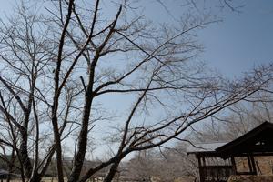 けいはんな公園梅と冬景色