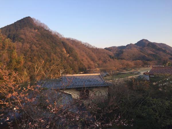 070403_sakura.jpg
