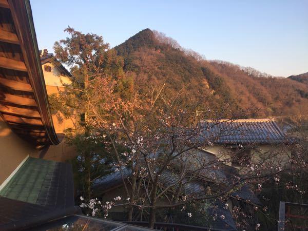 170403_sakura-2.jpg
