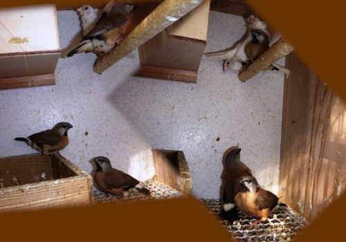 巣立ち雛3羽