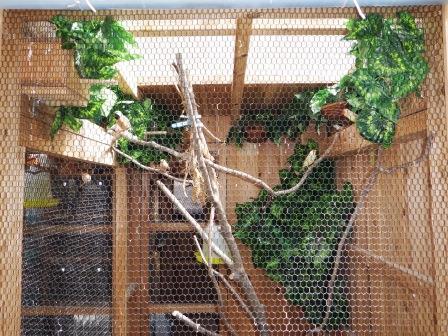 禽舎開放4