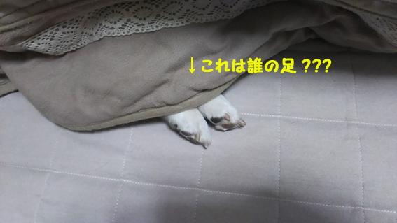 170309 新宿08