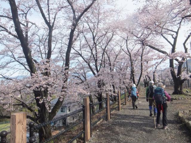 山梨①-1甚六桜