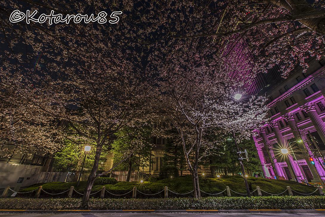 桜咲く日曜深夜の日銀本店 20170403