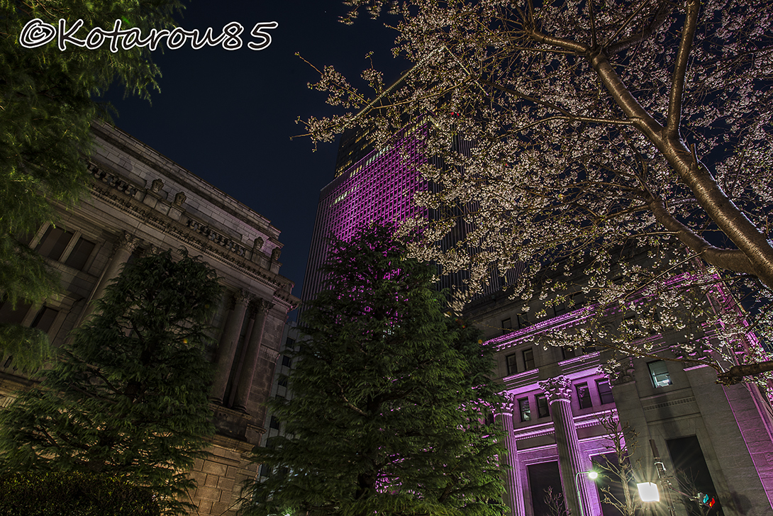 桜咲く日曜深夜の日銀本店2 20170403