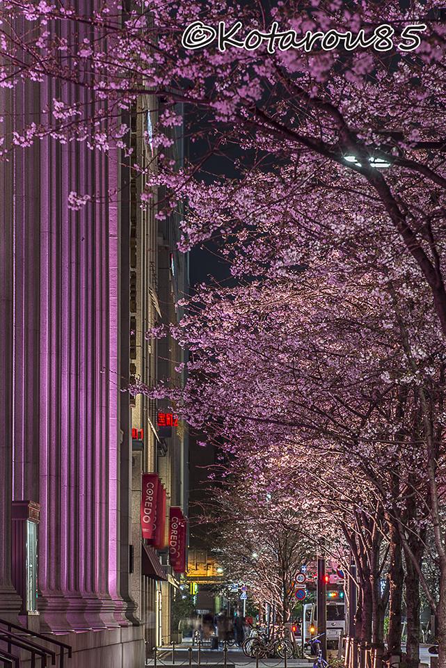 日本橋の桜並木 20170404