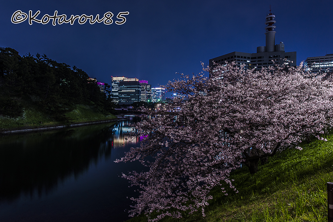 霞ヶ関 深夜の桜 20170407