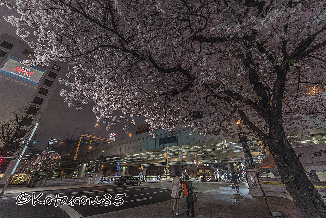 日本橋を覆う桜の傘 20170409