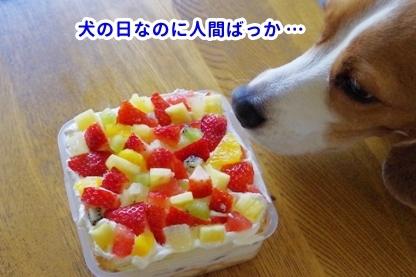 犬の日 7