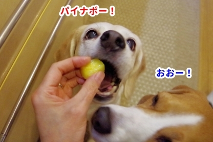 犬の日 6