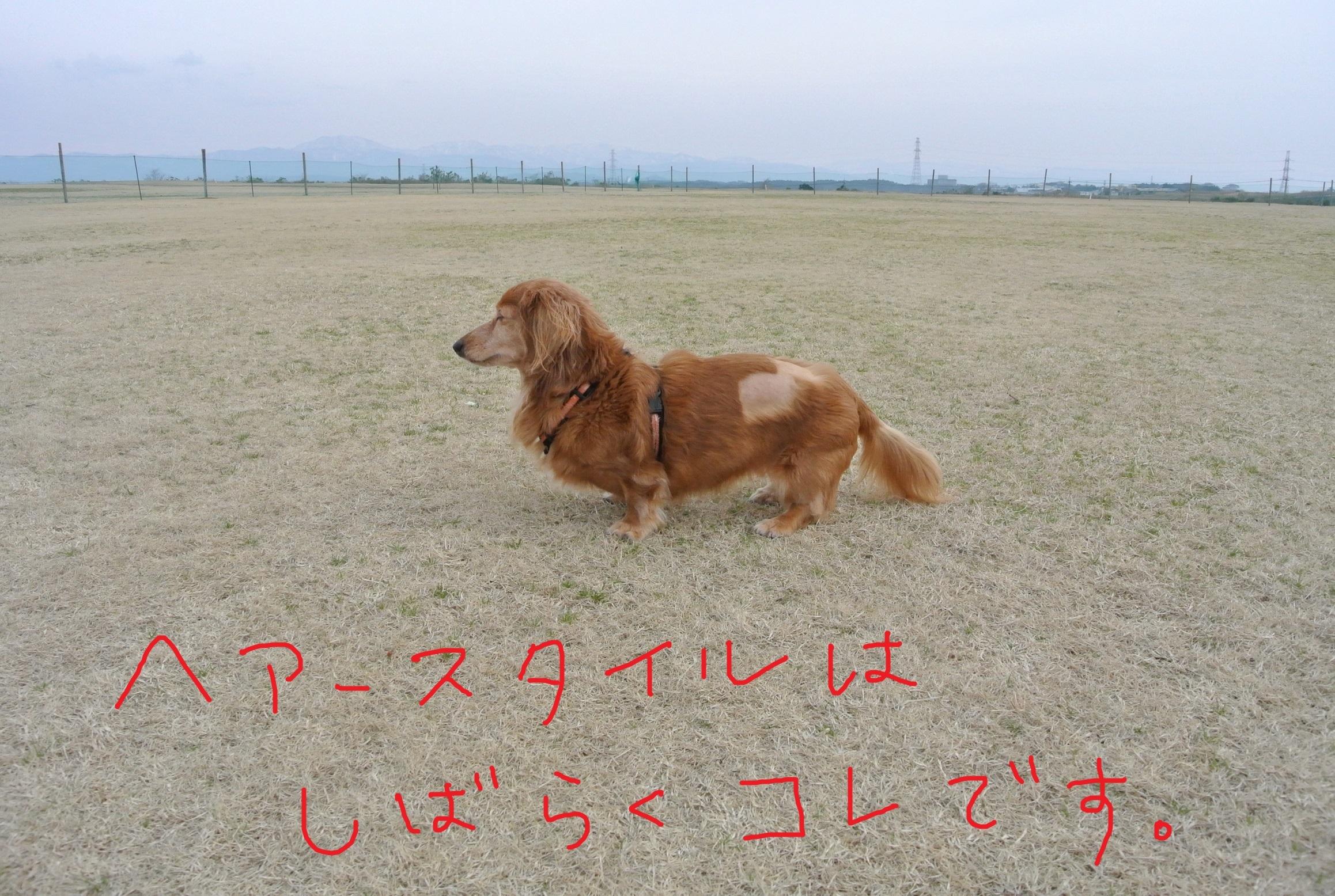 DSC_6847.jpg