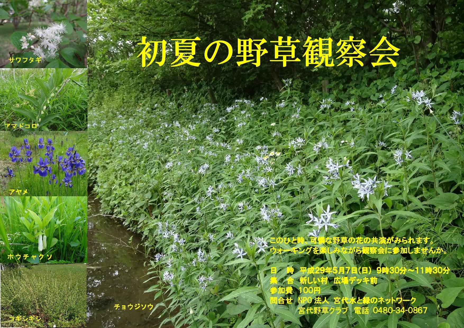 初夏の野草観察会(3)