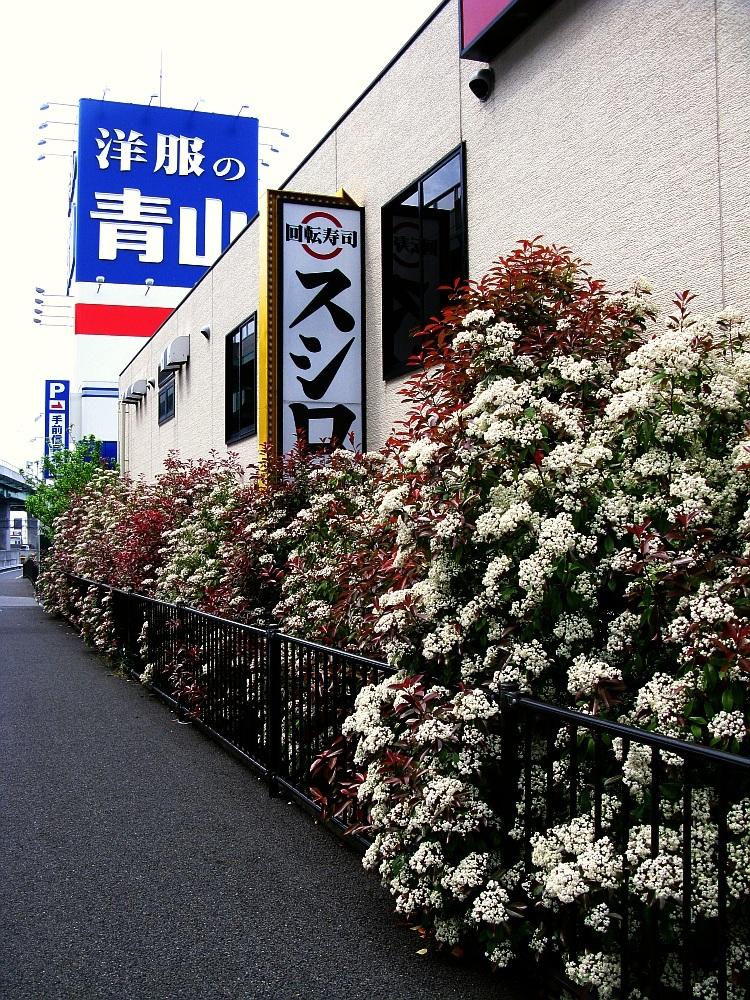 2016_04_23清須:スシロー (5)