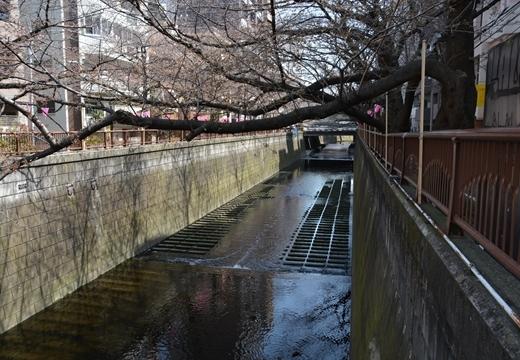 170325-105529-池尻・中目黒 (333)_R