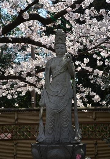 170404-122944-桜201702 (122)_R