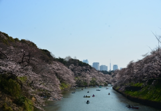 170404-131248-桜201702 (171)_R