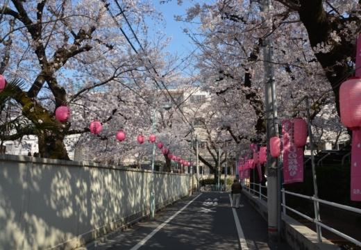 170404-142937-桜201702 (290)_R