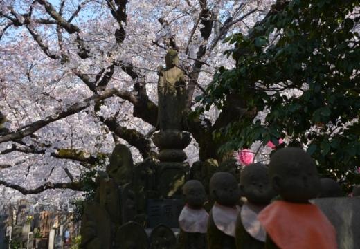 170404-143259-桜201702 (302)_R