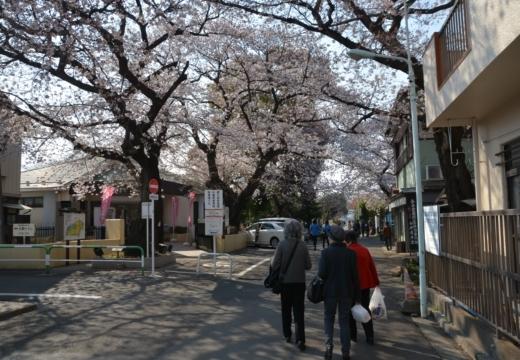 170404-144230-桜201702 (332)_R