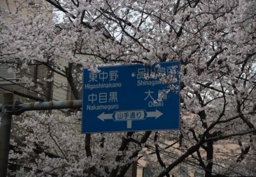 170408-134459-桜201704 (50)_R