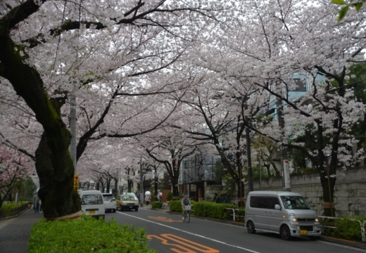 170408-135106-桜201704 (75)_R