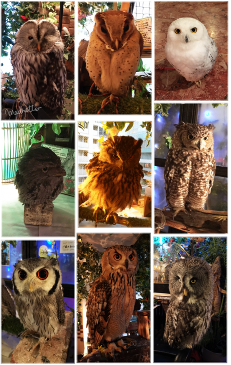 owlcafeakb