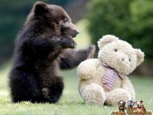 クマがいくブログ