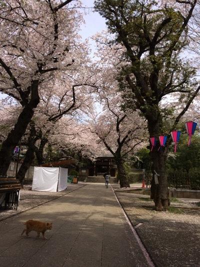 201704-01houmyouji1.jpg