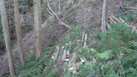 栗山の間伐