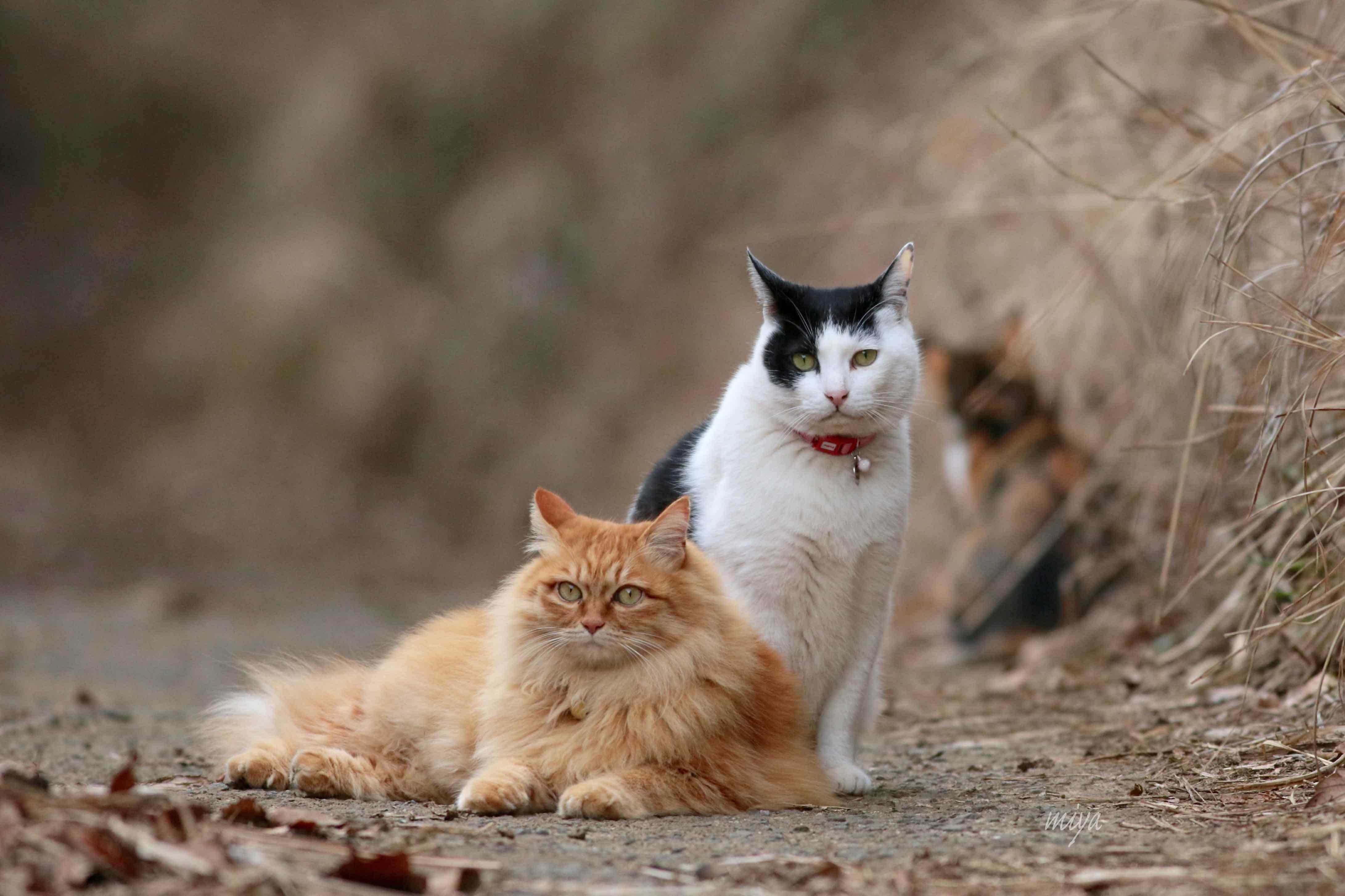 猫3にゃんm032A0584