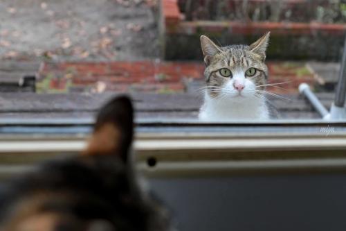 窓若♂猫m995A3384_edited-1