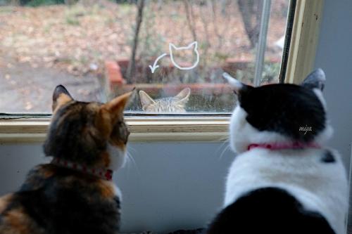 窓ねこよそ猫995A3379