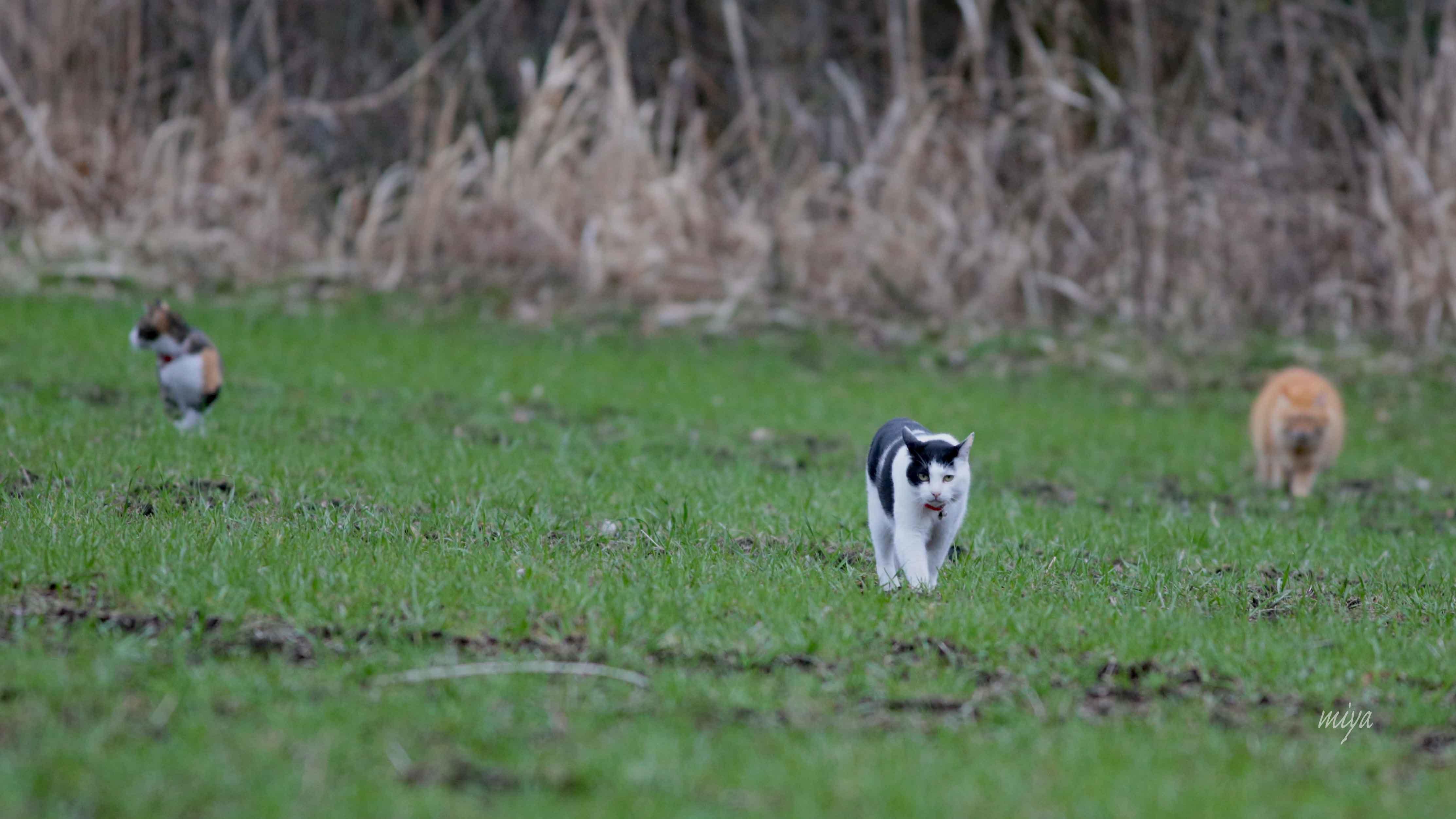 猫3はたけm032A5597