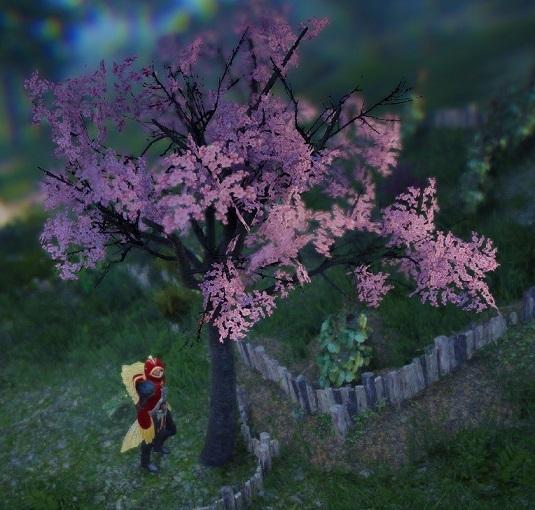 桜を育てる