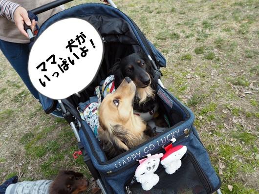 Image_182a8b9.jpg