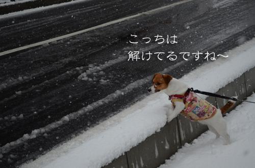 2017-02-11-雪-048