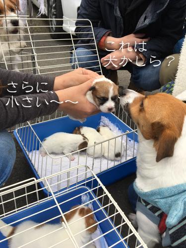2017-02-12-ぴゅあ里帰り-030