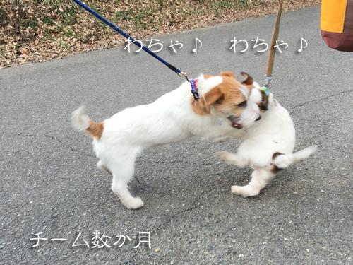 2017-02-12-ぴゅあ里帰り-042