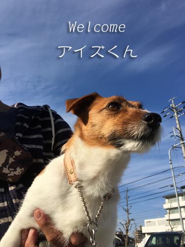 2017-03-04-ジョフィエルズ-009