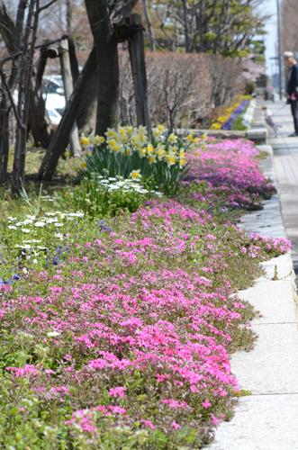 2017-04-04-桜ソフトピア-056