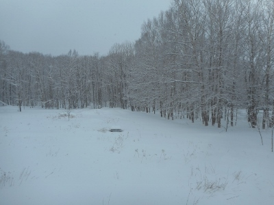春の雪9センチ