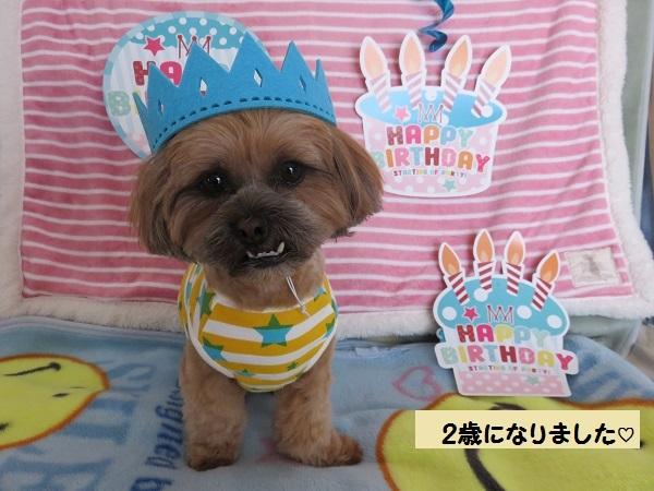 20170404ぱん君誕生日