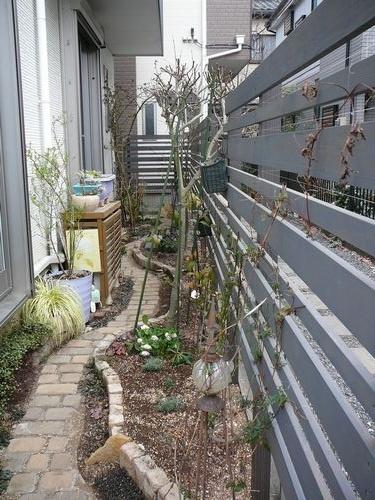 壁面緑化からの・・・