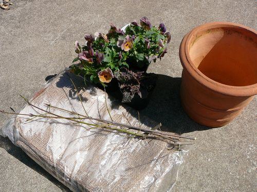 春の寄せ植え