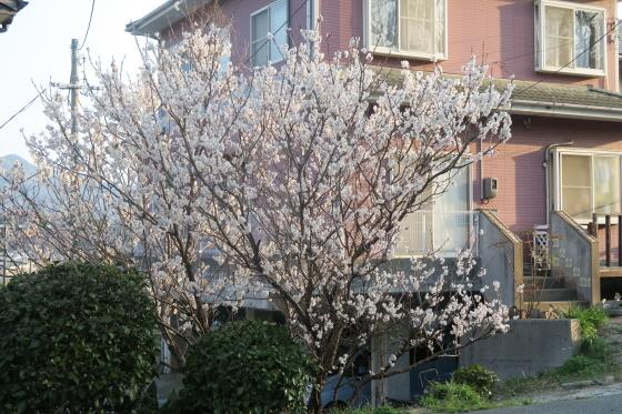 春を先取り1