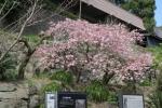 仙巌園11