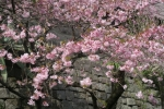 仙巌園12