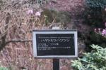 仙巌園17